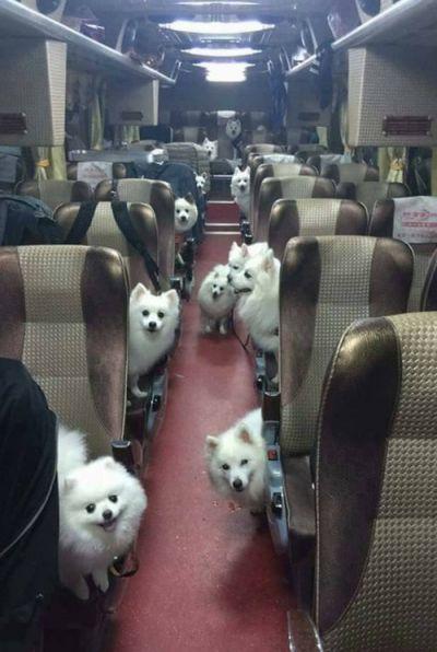 飛行機の 座席は 犬だらけ