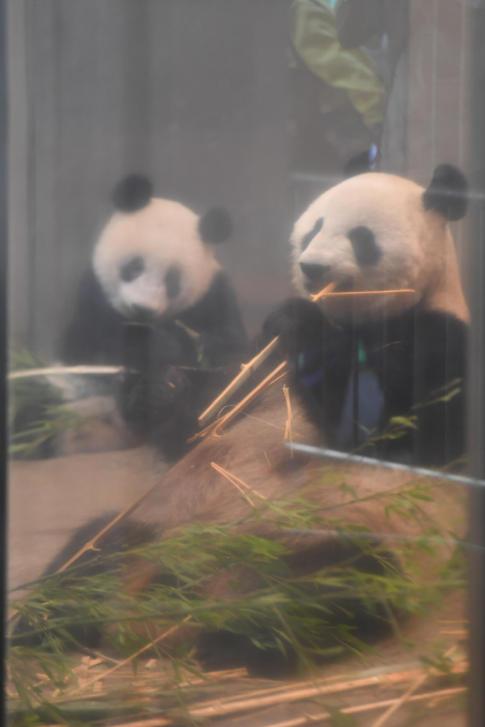 パンダ親子の食事と お話