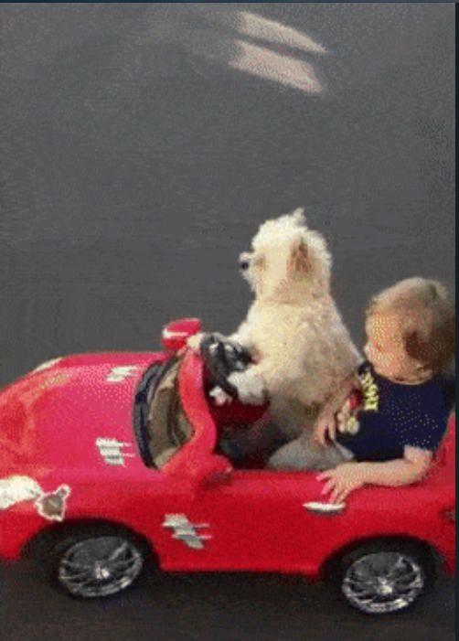 動物 中古車 消費税