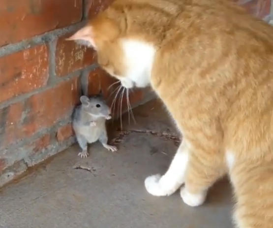 猫と ネズミ