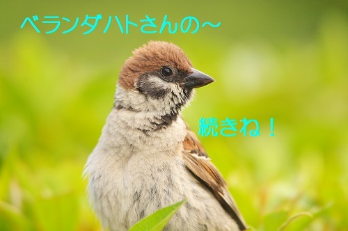 010_20180816183510fff.jpg
