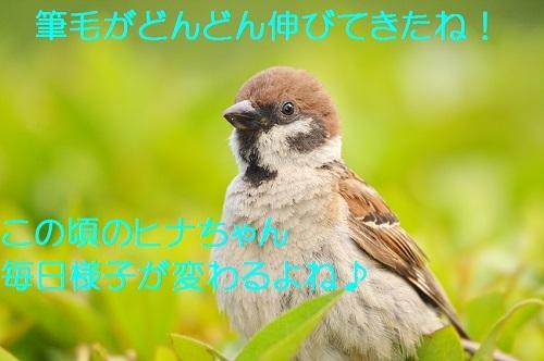 060_2018081618351715b.jpg