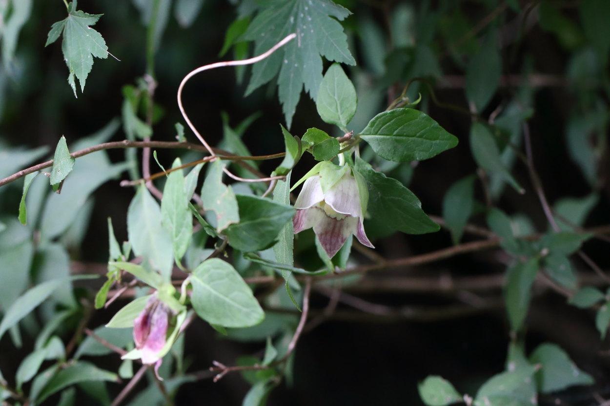 hannsozuru-1809-01.jpg