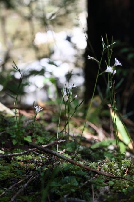 kikohaguma-1611-03.jpg