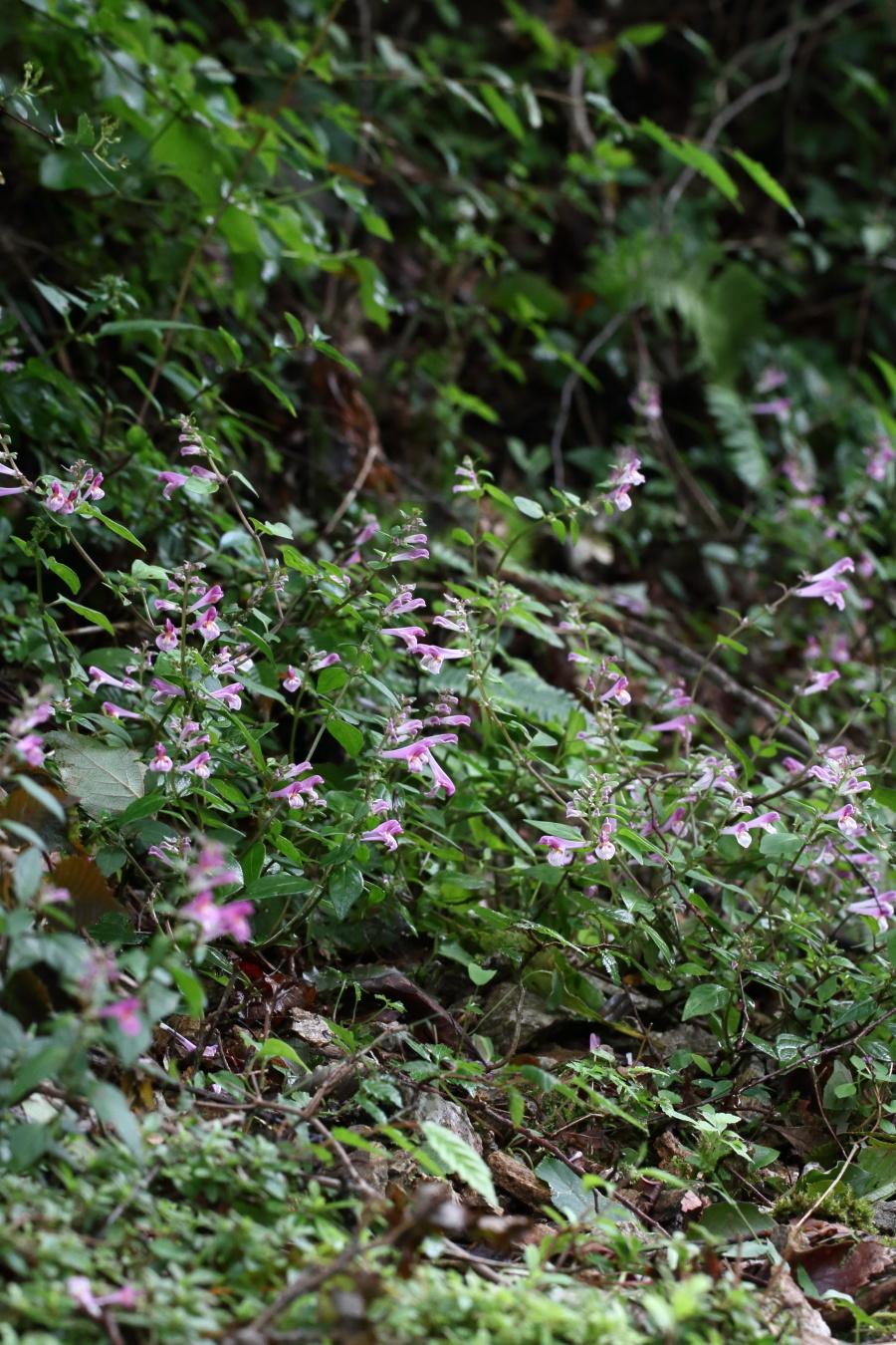 sikokumamakona-1809-04.jpg