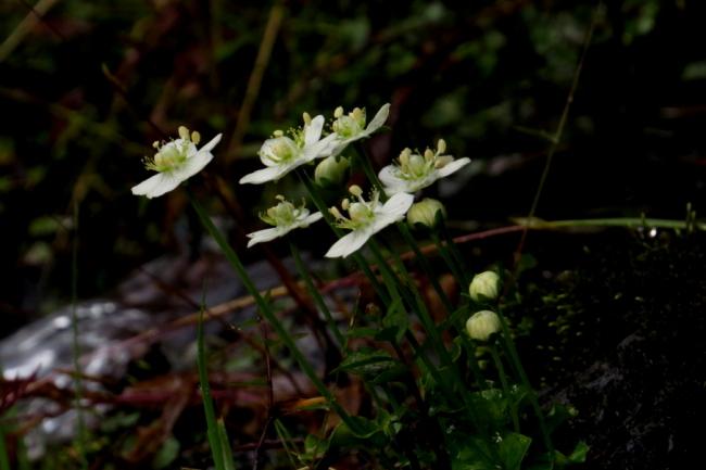 umebatiso-1310-03.jpg