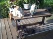 朝の猫たち