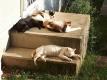 日田ぼっこの猫たち