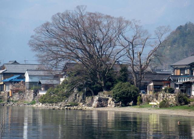 北琵琶湖・水辺景観1