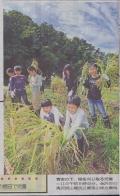 杜の里小の稲刈り
