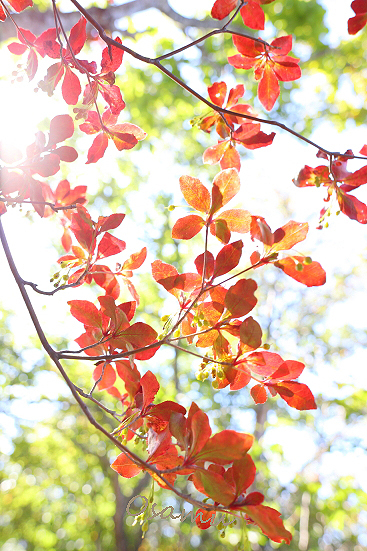 18-09-28_kuryuyama-gunma-0074.jpg