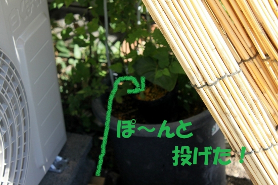 カエルも暑い_5439 (8)