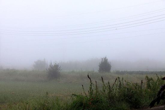 朝の景色_5509