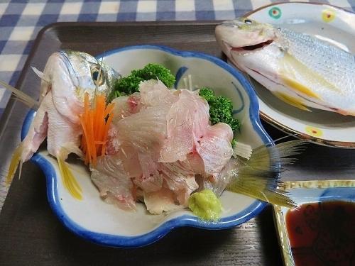 朝採れ平鯛(ヘダイ)♪20cm~久しぶりにお造りして食べました♪まいう~2018.10.08