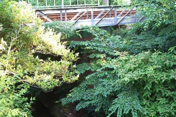 180602_161255_玉川上水橋梁1200