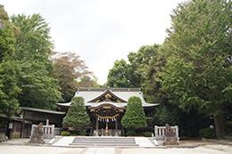 180913春日部八幡神社ご神木
