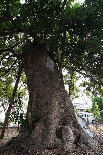 180924碇神社のイヌグス④