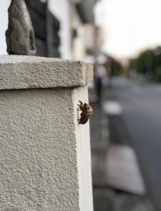 180815_01抜け殻