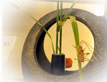 824大和屋竹の虫