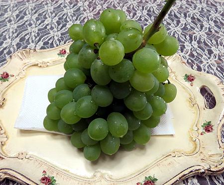 913葡萄初収穫