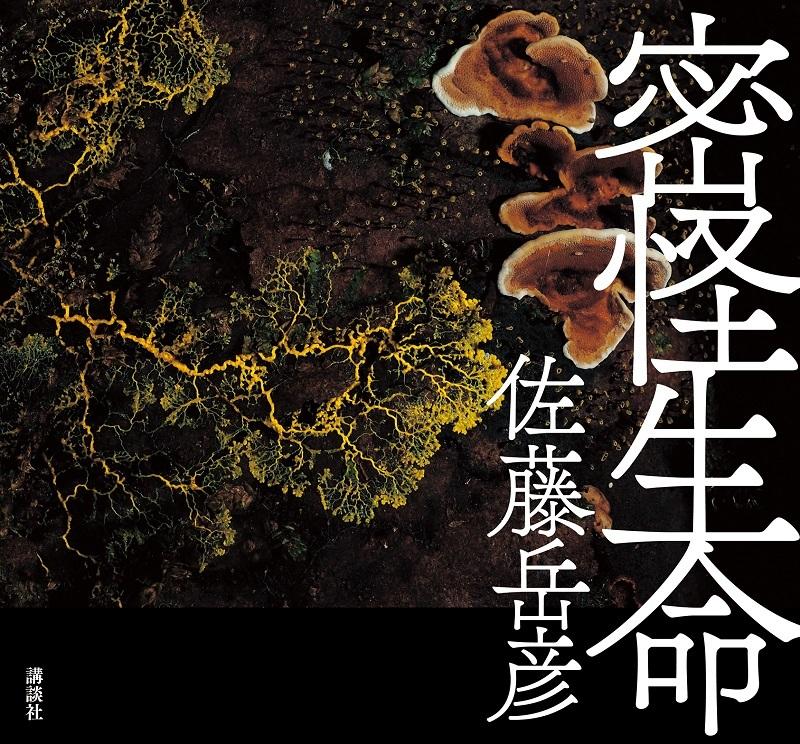mikkai_cover_F1_OL_G2_H_.jpg