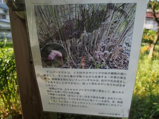 20180922・多磨霊園16・中