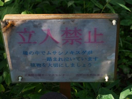 20180922・多磨霊園ネオン05