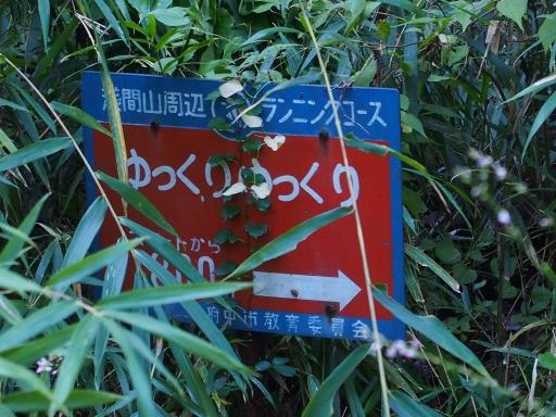 20180922・多磨霊園ネオン11