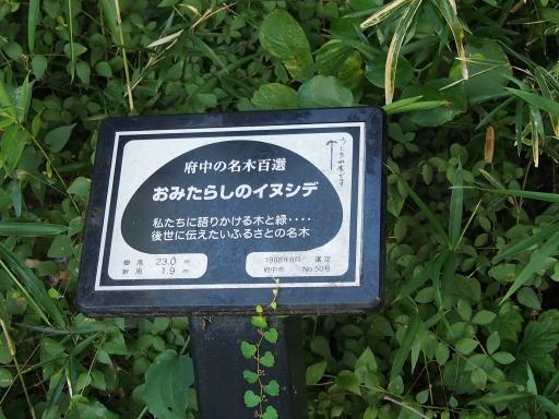 20180922・多磨霊園ネオン14
