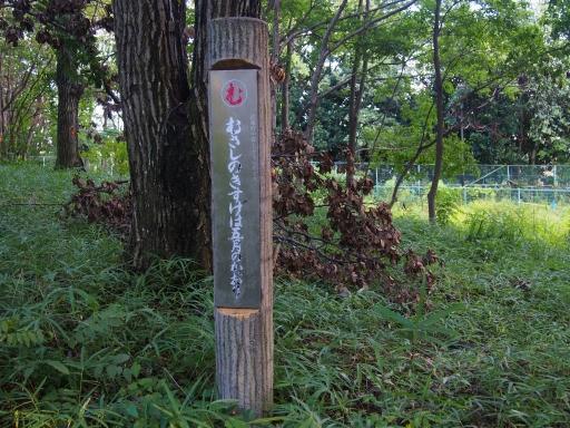 20180922・多磨霊園ネオン19