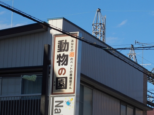 20181007・ところざわ祭ネオン2