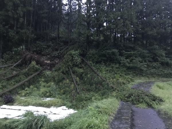 180905-台風21号 (6)