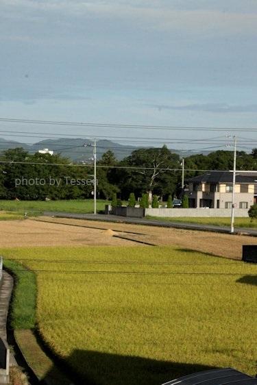 IMG_6145稲刈り