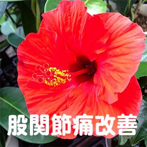 股関節痛,京都,宇治,大津,草津