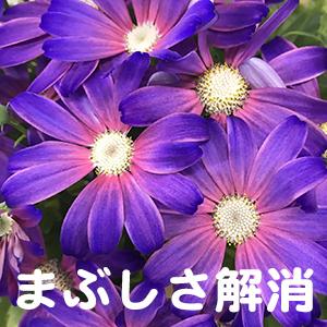 眩しい,眼精疲労,堺,東大阪,岸和田