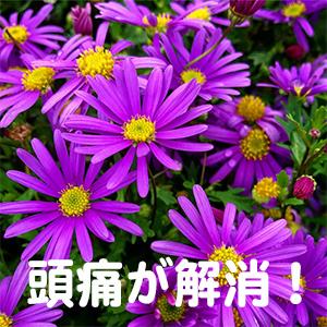 頭痛,京都,福知山,南丹,亀岡