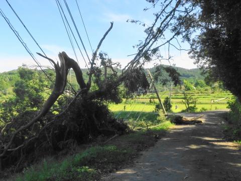 「台風24号倒木停電」青柳地区④