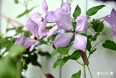 お庭のお花。。