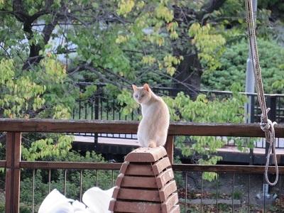 今朝の猫1013A