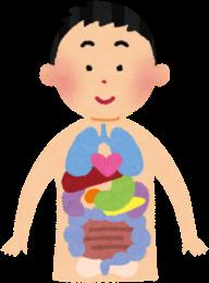 内臓 臓器 人体