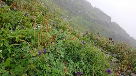 お花畑blog
