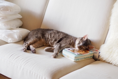 おやすみblog