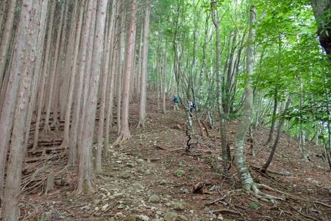 鷹ノ巣山12blog