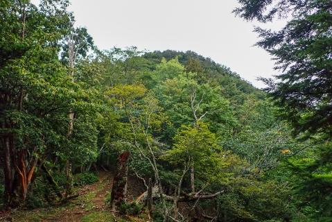鷹ノ巣山14blog