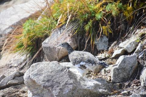 唐松岳の雷鳥6blog