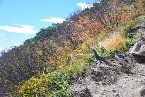 唐松岳の雷鳥7blog