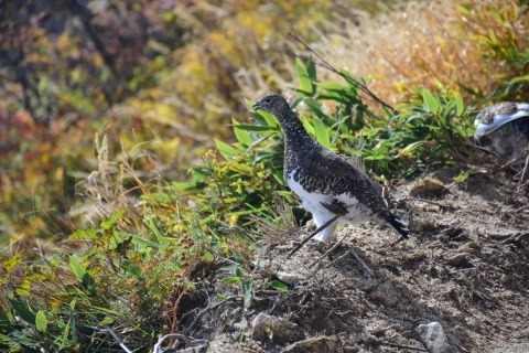 唐松岳の雷鳥8blog