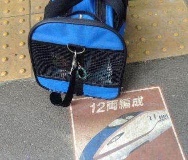 今回は新幹線