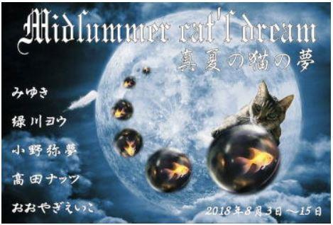 真夏の猫の夢