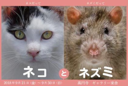 原啓義写真展 ネコとネズミ